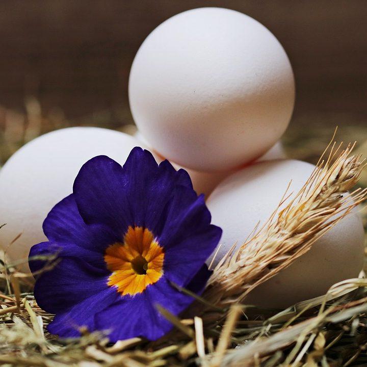 egg-2048486_960_720